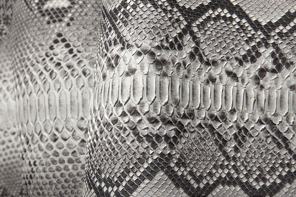 Pitone reticulatus